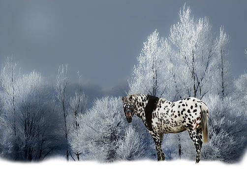 Randall Branham - Tiger Horse Blue Winter
