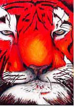 Tiger by Jacob Hostetler