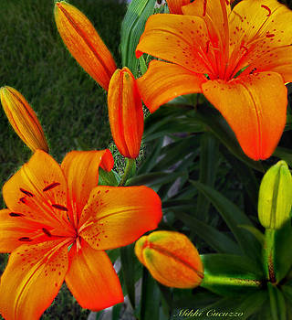 Tiger Lillies and buds by Mikki Cucuzzo