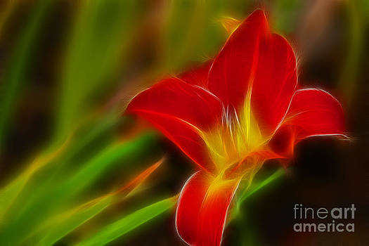 Gary Gingrich Galleries - Tiger Lily 6049-Fractal