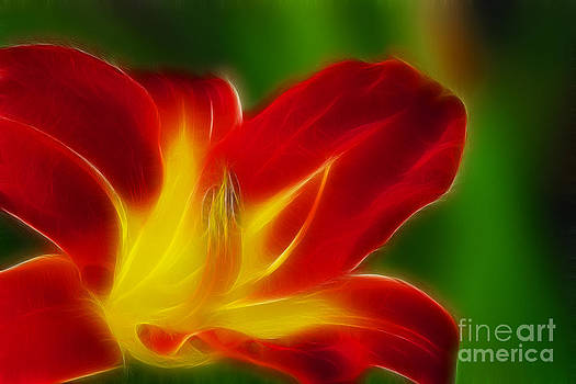 Gary Gingrich Galleries - Tiger Lily 6374-Fractal
