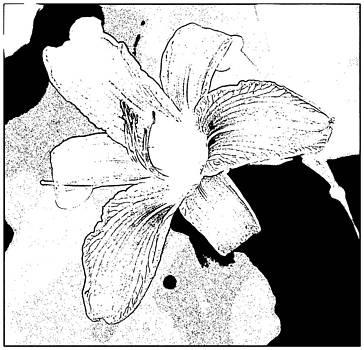 Joe Bledsoe - Tiger Lily