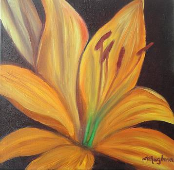 Tiger Lily by Meghna Suvarna