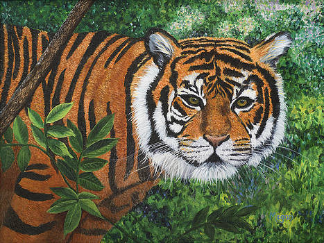 Tiger by Megan Morris Collection