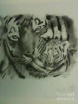 Tiger by Michael Iglesias