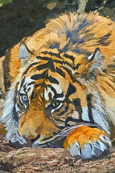 David Pringle - Tiger Oil Painting