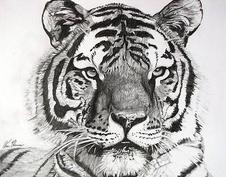 Tiger on Piece of Paper by Kevin F Heuman