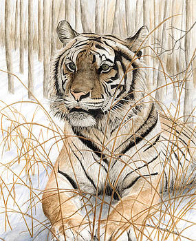 Tiger On Snow by Marshall Bannister