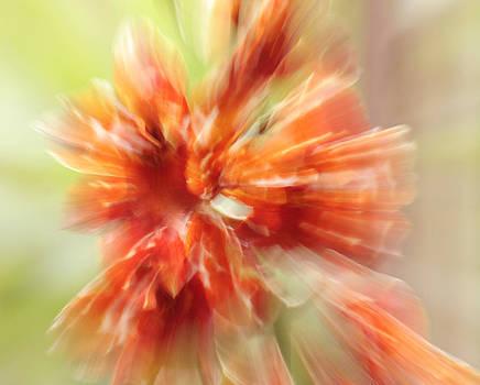 Susan Leake - Tiger Orchid