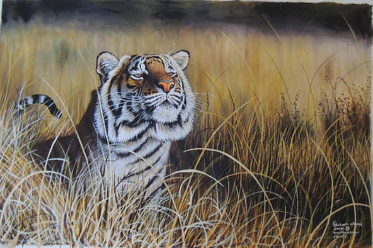 Tiger Ready to Pounce  by Hukam Chand Wildlife artist
