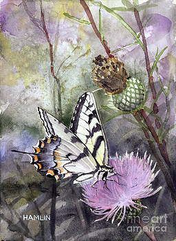 Tiger Swallowtail on Clover by Steve Hamlin