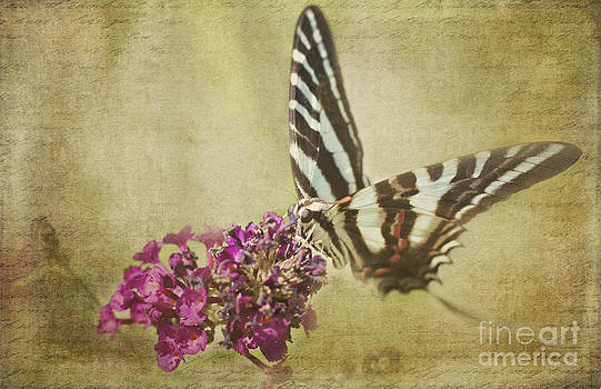 Tiger Swallowtail by Pam  Holdsworth