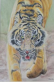 Tiger by Teresa Smith