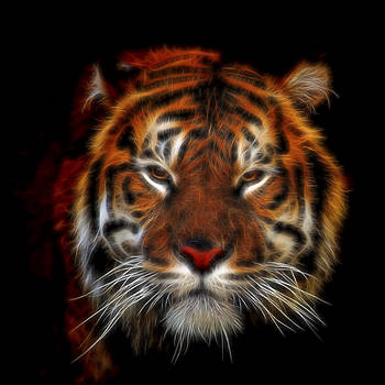 Tiger tiger Burning Bright by Andrew Munro