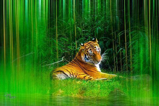 Glenn Feron - Tigers Misty Lair