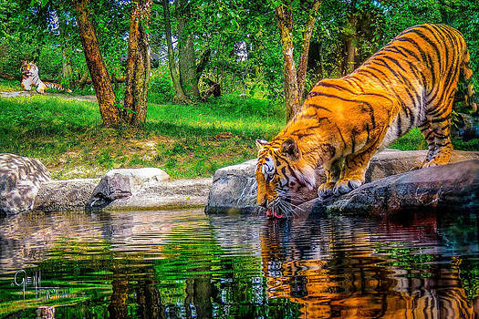 Glenn Feron - Tigers Pond