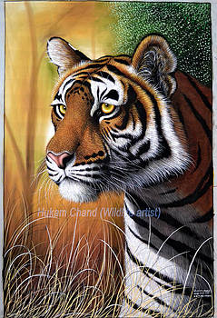 ''tiger's Side Face'' by Hukam Chand Wildlife artist