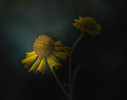 Til We Meet Again by Paul Barson
