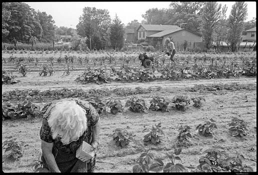 Tilling the Field by David Riccardi