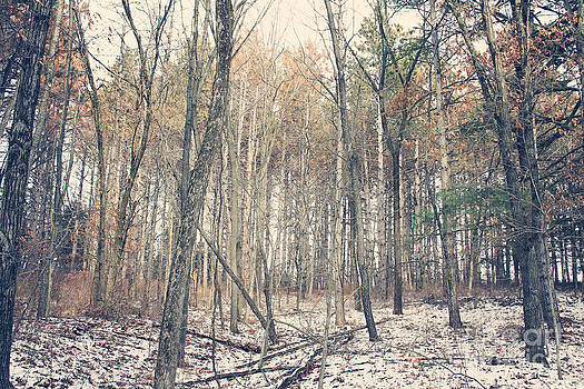 Timber In The Winter by Brin Schooley