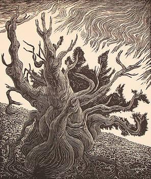 Timberline Traveler by Maria Arango Diener