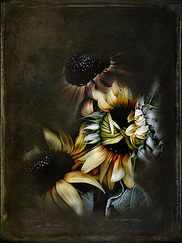 Timid Sunflower Textured by Sally Bauer
