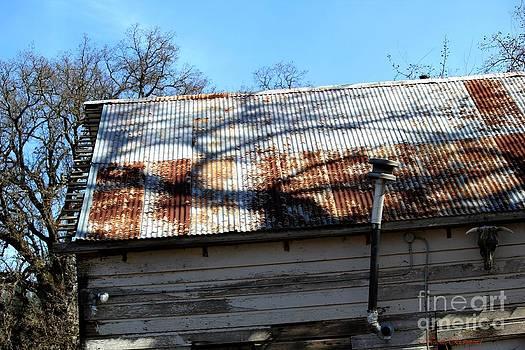 Naomi Richmond - Tin Roof