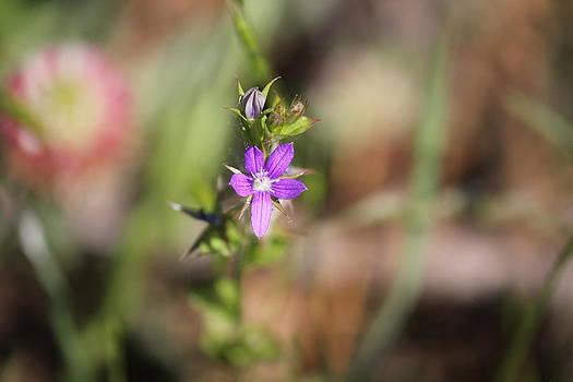Tiny Flower by Charlotte Craig