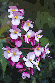 Guy Shultz - Tiny Flowers