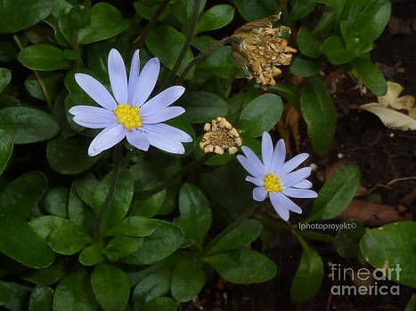 Tiny flowers by Paulina Mallard