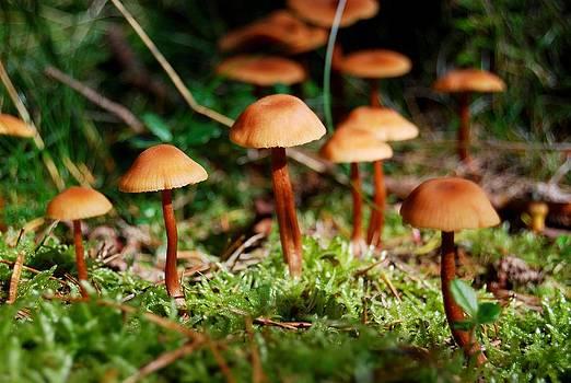 Tiny forest mushrooms by Sonya Kanelstrand