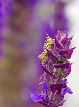 Tiny Grasshopper by Dana Moyer