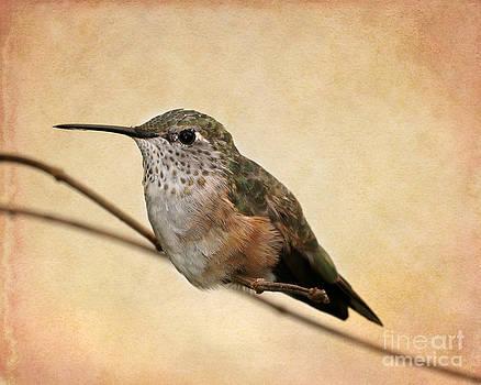 Sabrina L Ryan - Tiny Hummingbird Resting