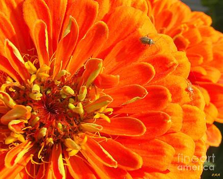 Tiny On Orange by Heidi Manly