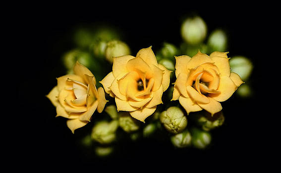 Tiny roses - 5 millimeters by Denis  Los