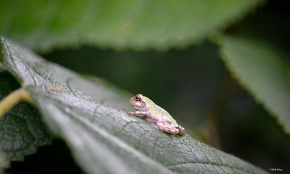 Maria Urso  - Tiny Tree Frog