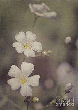 Tiny White Flowers by Pam  Holdsworth