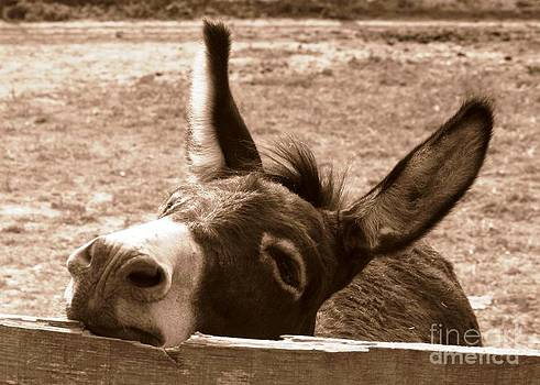 Tired little donkey  by Bren Thompson