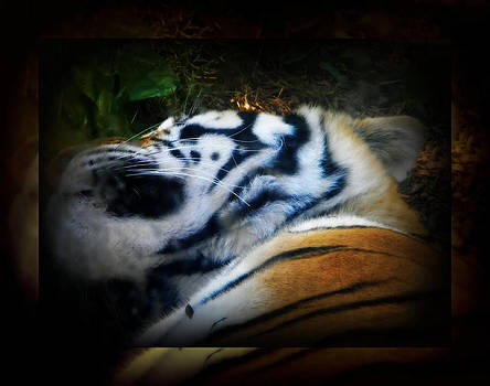 Tired Tiger by Amanda Eberly-Kudamik