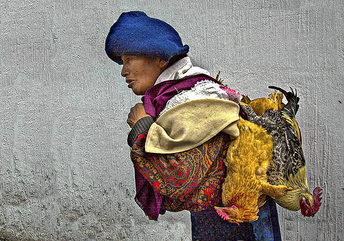 To Market with Chickens by Tina Manley