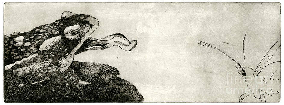 Toad And Butterfly - When There Is No Way Forward - Predator-Prey System - Food Chain - Etching Series by Urft Valley Art