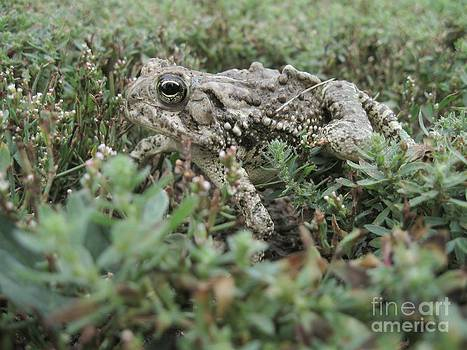 Toad by Crissy Boss