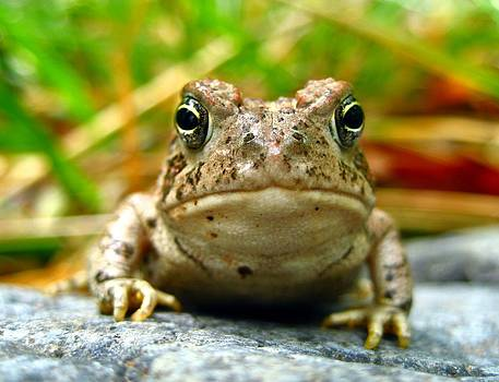 Toad by Emily Fidler