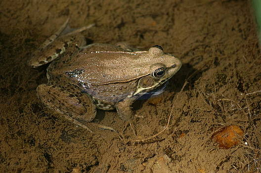 Toad by Heidi Poulin