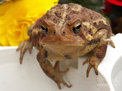 Judy Via-Wolff - Toad