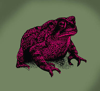 Toad by Viv Griffiths
