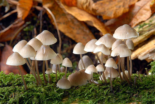 Toadstools on a log by Andrew James