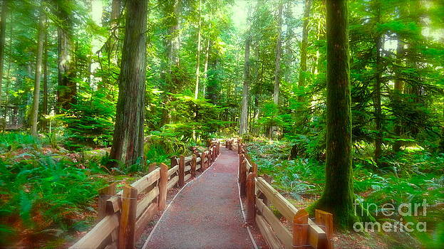 Tofino forest by Tina Hannaford