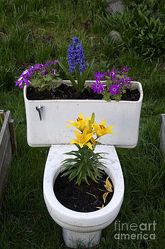 John  Mitchell - Toilet Bowl Planter