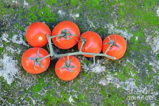 Tomato by Bobby Mandal